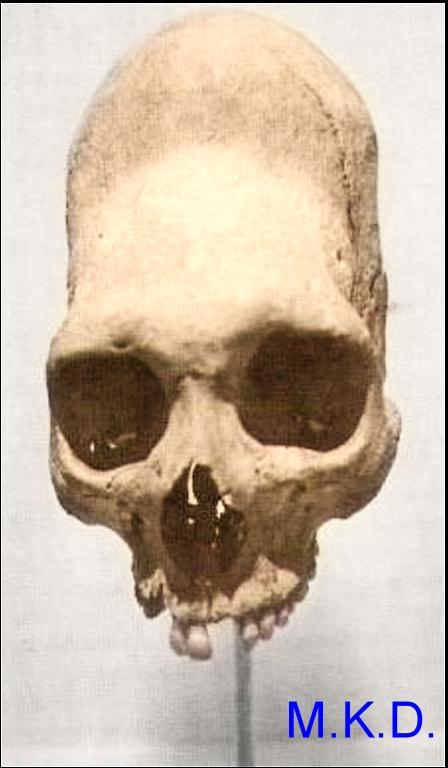 mandoag-skull-watermark